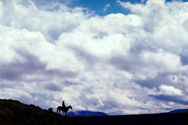 Blazing Saddles – Explore Kuranda Rainforest By Horse Back