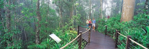 Experience the Rainforest at Marlin Cove Resort
