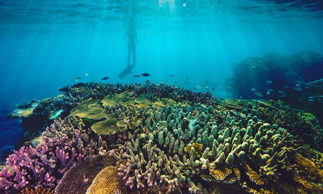 Discover the Great Barrier Reef This Summer | Cairns Beach Resort
