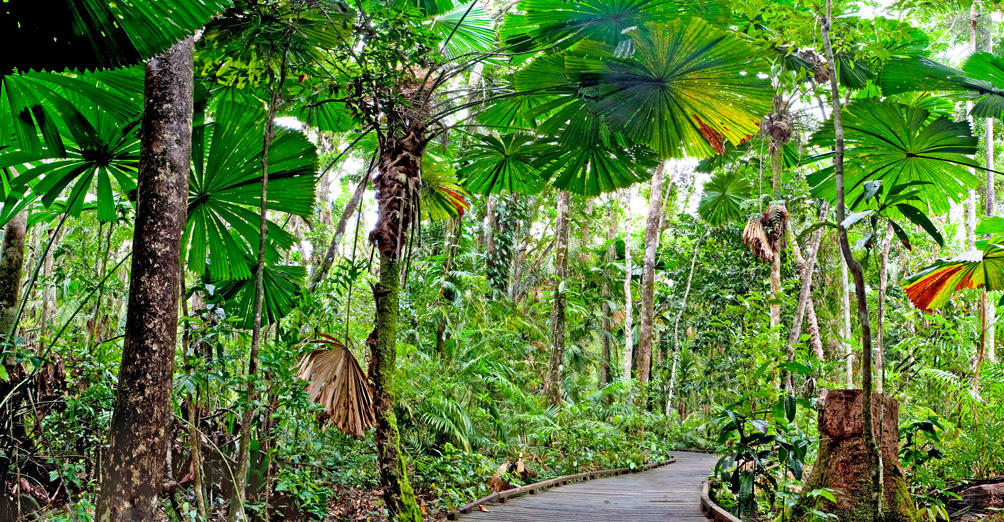 5 Best Things to Do in Cairns This Spring | Cairns Holiday Accommodation